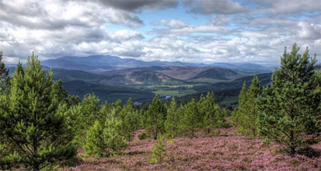 Royal Deeside Landscape